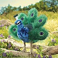 Peacock, Small Hand Puppet