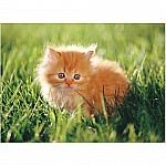 0030 PC Orange Kitten Cardboard Jigsaw