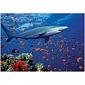 100 PC Shark Cardboard Jigsaw