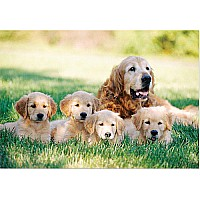 0100 pc Golden Retriever with Puppies Cardboard Jigsaw