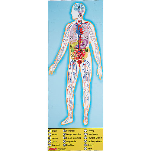 Human Body Floor Puzzle From Melissa Amp Doug Another