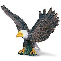 Bald eagle, spread wings