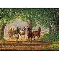 Country Lane Horses