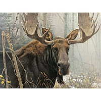 Bull Moose - 500 Pieces