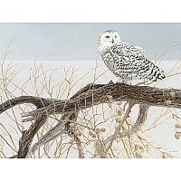 Fallen Willow Snowy Owl - 500 Pieces