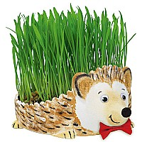 CK Grow a Hedgehog Kit