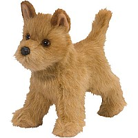 Dandy Cairn Terrier