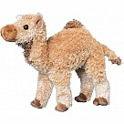 Lawrence Camel