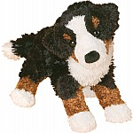 Miranda Bernese Mountain Dog
