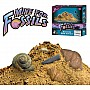 Mine For Fossils Kit with 10 Fossils