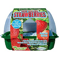 Grow Your Own Strawberries Sprout N Grow