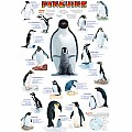 Penguins 1000-Piece Puzzle