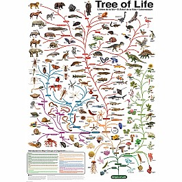 The Evolutionary Tree of Life 1000-Piece Puzzle