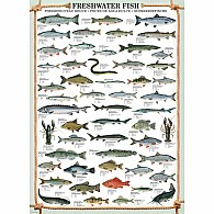 Freshwater Fish 1000-Piece Puzzle