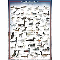 Coastal Birds 1000-Piece Puzzle