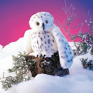 Owl, Snowy Hand Puppet