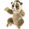 *Staff Pick* Slow Loris