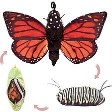 Monarch Life Cycle