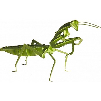 3-D Animal Paper Model Praying Mantis