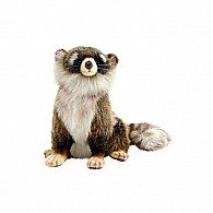 Racoon, Young 9""