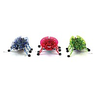 HEXBUG single Beetle (assorted)