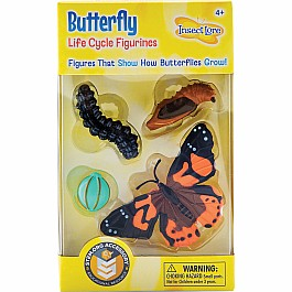 Butterfly Lifecycle Stages