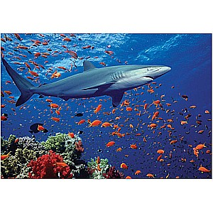 0100 PC Shark Cardboard Jigsaw