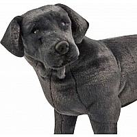 Black Lab - Plush