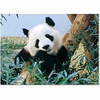 30 pc Giant Panda Cardboard Jigsaw