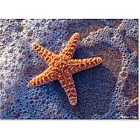 300 pc Sun-Kissed Sea Star Cardboard Jigsaw