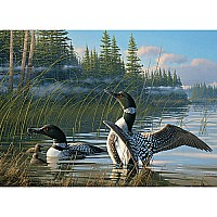 Common Loons - 1000 Pieces