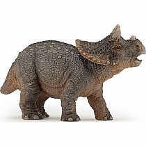 Young Triceratops