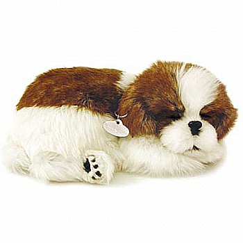 Perfect Petzzz Shih Tzu