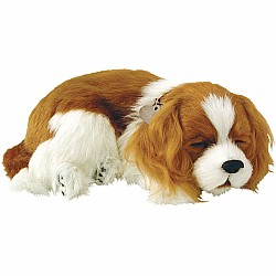 Perfect Petzzz Cavalier King Charles