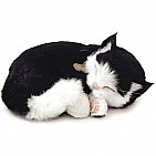 Black and White Domestic Shorthair Cat