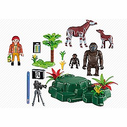 Gorillas and Okapis With Film Maker