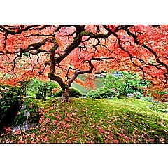 Japanese Maple Tree 1000 Piece Jigsaw Puzzle