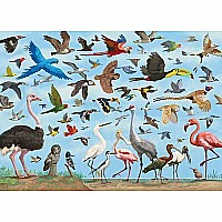 All The Birds 1000 Piece Jigsaw Puzzle