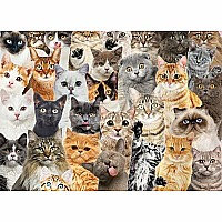 All The Cats 1000 Piece Jigsaw Puzzle