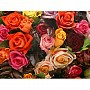 Ravensburger' A Rosy Bunch' 1000 piece 15612