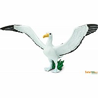 Bird: Giant Albatross