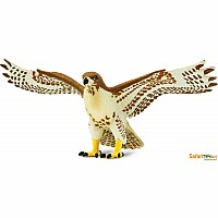 Bird: Red Tailed Hawk