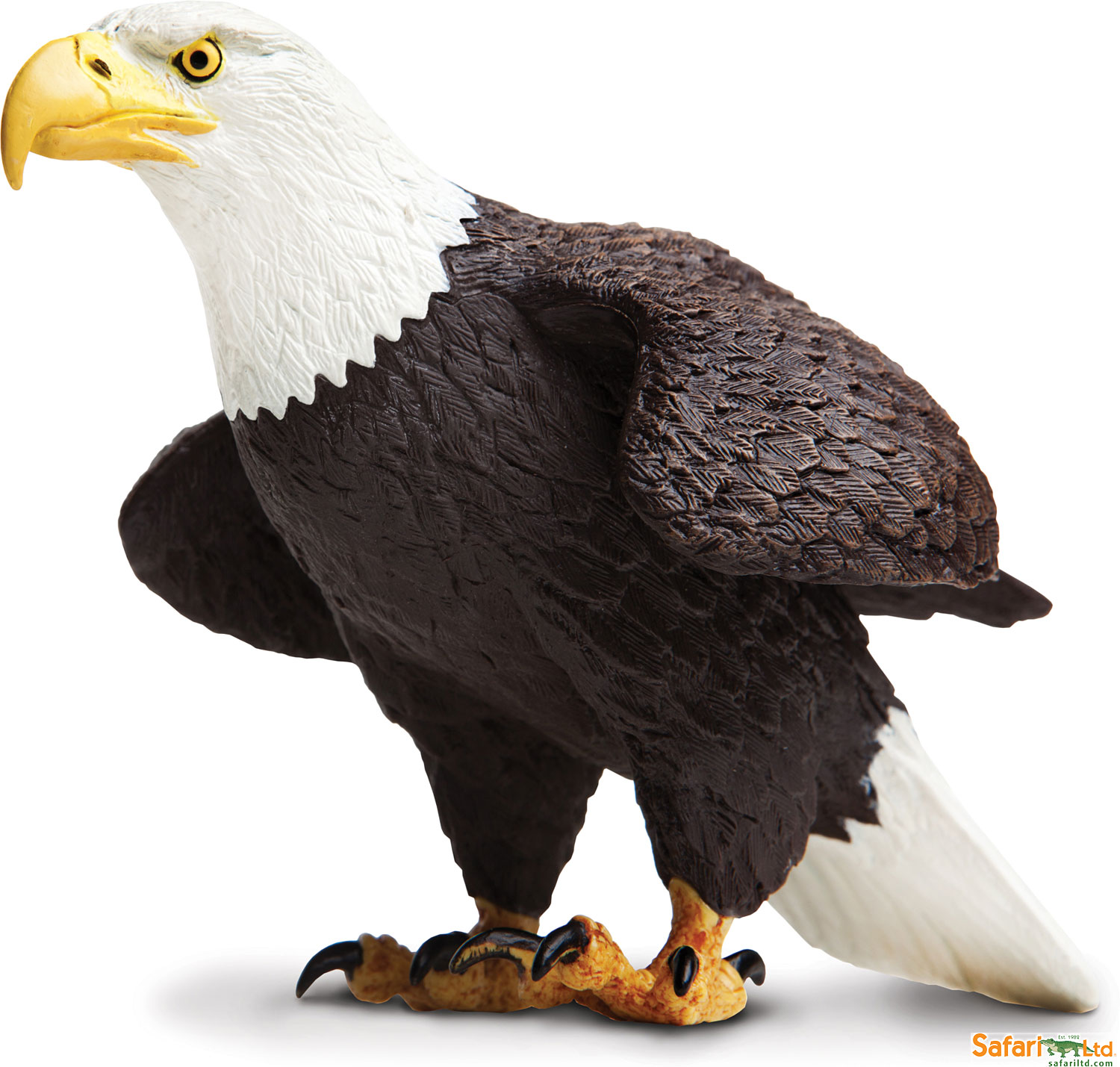 The 5 Love Languages That Bald Chick: Incredible Creature Bald Eagle