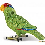 Green-cheeked Amazon Parrot