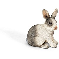 Rabbit, sitting 13673