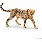 Cheetah, Female