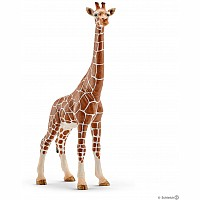 Giraffe, Female 14750