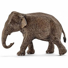 Asian Elephant, Female