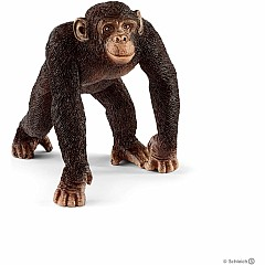 Chimpanzee, Male