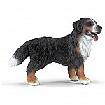 Bernese Mountain Dog, Standing